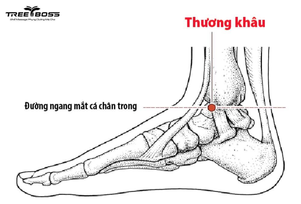 bấm huyệt bàn chân chữa bệnh