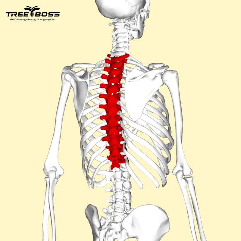 ngồi nhiều đau lưng