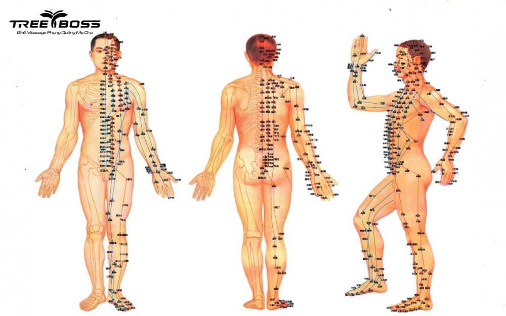bản đồ huyệt đạo trên cơ thể người